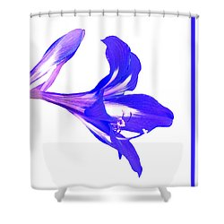 Shower Curtain featuring the photograph Royal Blue Lily On White by Rosalie Scanlon