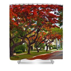 Royal Poinciana Trees In Blooming In South Florida Shower Curtain