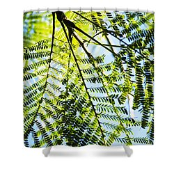 Royal Poinciana Tree Shower Curtain by Charmian Vistaunet