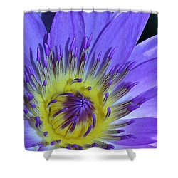 Royal Purple Water Lily #11 Shower Curtain
