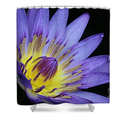 Royal Purple Water Lily #14 Shower Curtain by Judy Whitton