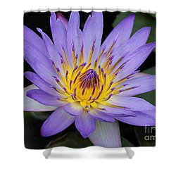 Royal Purple Water Lily #4 Shower Curtain by Judy Whitton