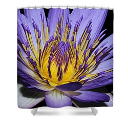 Royal Purple Water Lily #5 Shower Curtain by Judy Whitton