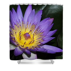 Royal Purple Water Lily #6 Shower Curtain