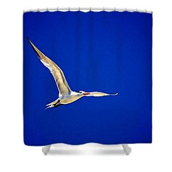 Royal Tern 2 Shower Curtain