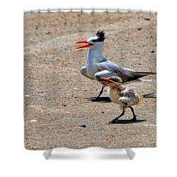 Royal Tern With Chick Shower Curtain