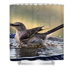 Shower Curtain featuring the photograph Rub-a-dub-dub Mockingbird by Nava Thompson