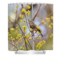 Shower Curtain featuring the photograph Ruby-crowned Kinglet by Kerri Farley