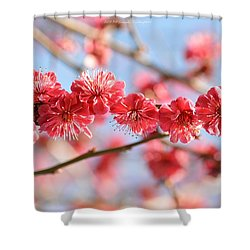 Ruby Studded Shower Curtain
