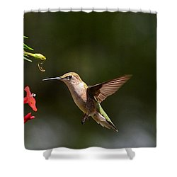 Ruby Throat Hummingbird Shower Curtain