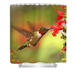 Ruby Throat Hummingbird Photo Shower Curtain