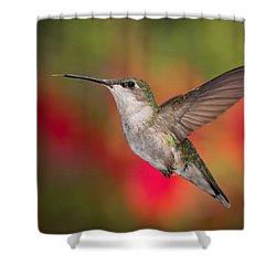 Ruby Throated Hummingbird Shower Curtain