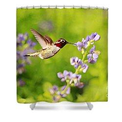 Ruby Throated Hummingbird Shower Curtain by Darren Fisher