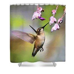 Ruby-throated Hummingbird - Digital Art Shower Curtain