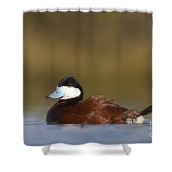 Shower Curtain featuring the photograph Ruddy Duck  by Bryan Keil