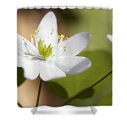 Rue Anemone Shower Curtain by Melinda Fawver