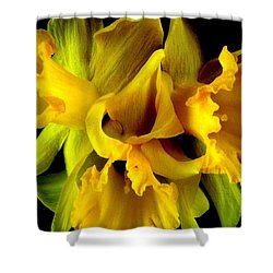 Shower Curtain featuring the photograph Ruffled Daffodils by Marianne Dow
