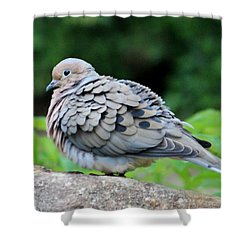 Ruffled Feathers Shower Curtain by Cynthia Guinn
