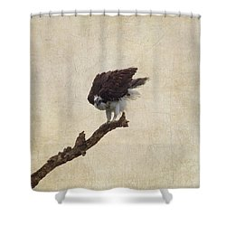 Ruffled Up Osprey Shower Curtain by Kim Hojnacki