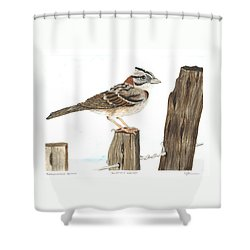 Rufous-collared Sparrow Shower Curtain by Cindy Hitchcock