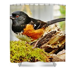 Shower Curtain featuring the photograph Spotted Towhee by VLee Watson