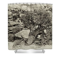 Rugged Tree Shower Curtain by Betty Depee