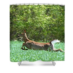 Shower Curtain featuring the photograph Run Forest Run by Neal Eslinger