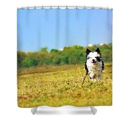 Running Dog Shower Curtain by Daniel Precht