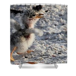 Running Free - Least Tern Shower Curtain by Meg Rousher