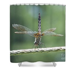 Running On All Six Shower Curtain by Eunice Miller