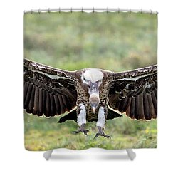 Ruppells Griffon Vulture Gyps Shower Curtain by Panoramic Images