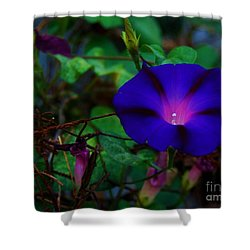 Rust And Glory Shower Curtain