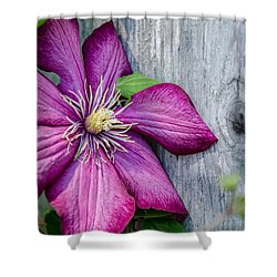 Shower Curtain featuring the photograph Rustic Clematis by Susan  McMenamin