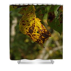 Shower Curtain featuring the photograph Rusty Leaf by Nick Kirby
