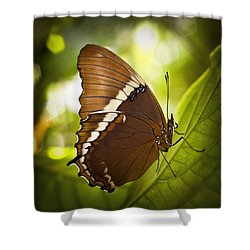 Rusty Tip Butterfly Shower Curtain by Bradley R Youngberg