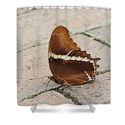 Rusty Tipped Page Butterfly Shower Curtain by Judy Whitton