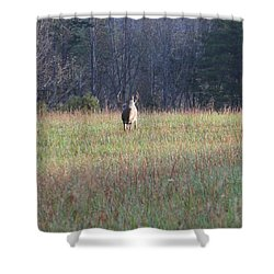 Rut Shower Curtain by Dan Sproul