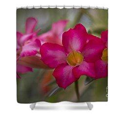 Sabi Star - Desert Rose Garden Of Dreams Hawaii Shower Curtain by Sharon Mau
