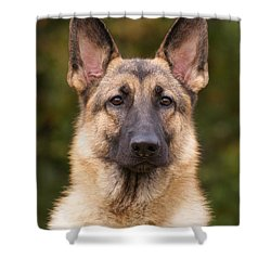 Sable German Shepherd Dog Shower Curtain