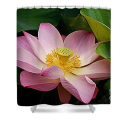 Sacred Lotus Shower Curtain by Byron Varvarigos