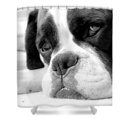 Sad Boxer Dog Shower Curtain