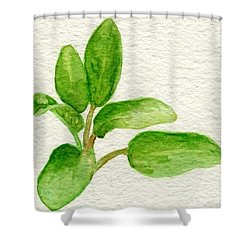 Sage Shower Curtain by Annemeet Hasidi- van der Leij