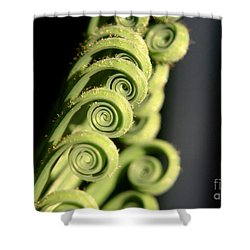 Sago Palm Leaf - 3 Shower Curtain