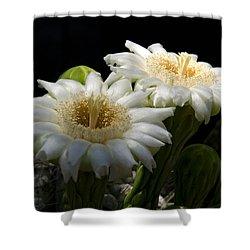 Saguaro Cactus Flowers  Shower Curtain by Saija  Lehtonen