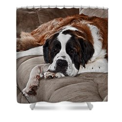 Saint Bernard Shower Curtain