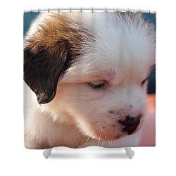 Saint Bernard Puppy Shower Curtain by Mechala  Matthews