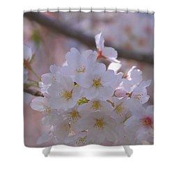 Sakura Shower Curtain by Rachel Mirror