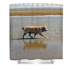 Shower Curtain featuring the photograph Sally Iv by Cassandra Buckley