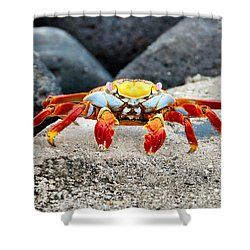 Sally Lightfoot Crab Shower Curtain