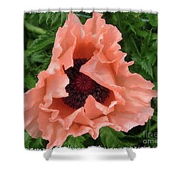 Shower Curtain featuring the photograph Salmon Colored Poppy by Barbara Griffin